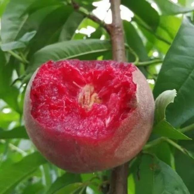 补铁的水果(被称为补铁之王的水果)