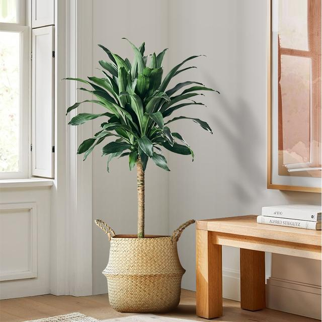 100种观叶绿植,50种大型的,50种小型的,家里没有阳光也能养