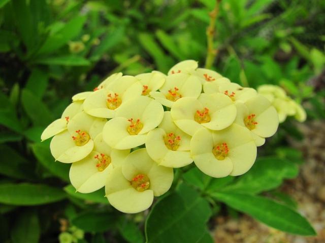 """""""穷养""""10种花,花盆越小长得越旺,寿命还很长,养成老桩更旺家"""