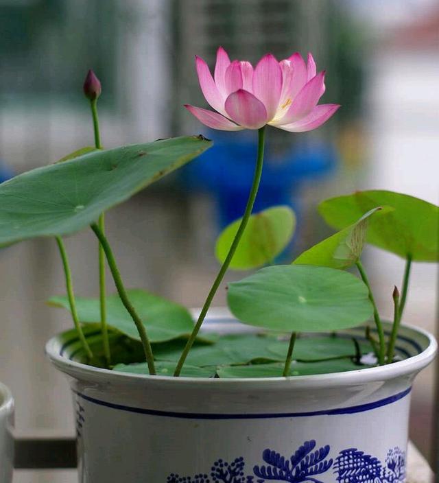 """容易因多浇水而死的""""18种花"""",养不活都是由于手太勤"""