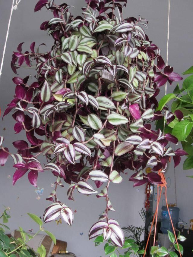 38种超级耐阴的花,没光也能养爆盆,养在阳台客厅超有范儿