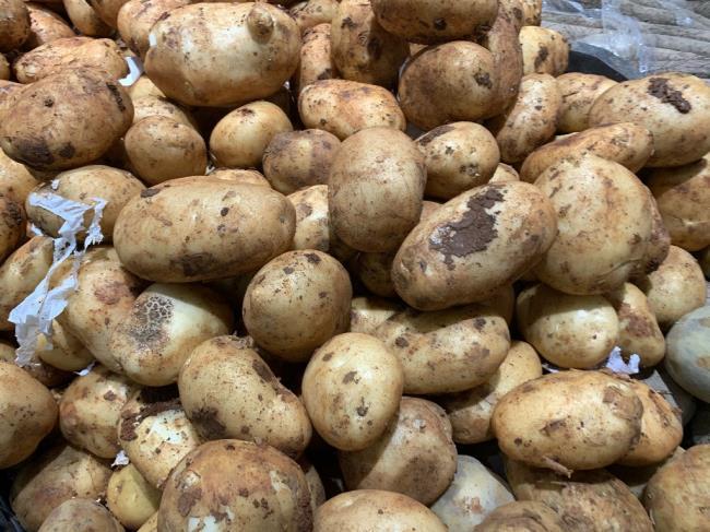 我家经常吃发芽的土豆(经常吃土豆的要留意了)